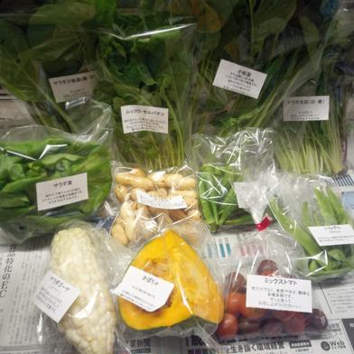 丹沢旬菜セット 小 (エコファーマー認証取得) 5品目前後 食材ジャンル: 野菜 > セット・詰め合わせ 通販