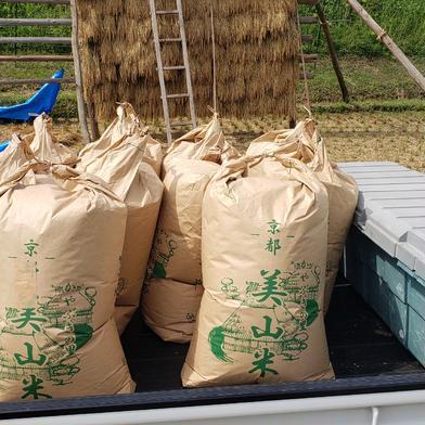 新米!大嘗祭の献上米!キヌヒカリ【10キロ】 10キロ 京都府 通販
