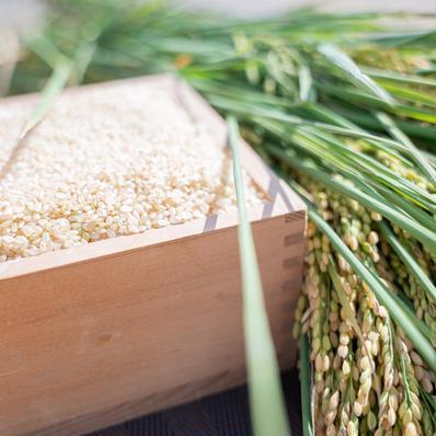 令和2年度産合鴨農法はぜ掛け米(玄米) 5kg キーワード: 数量限定 通販
