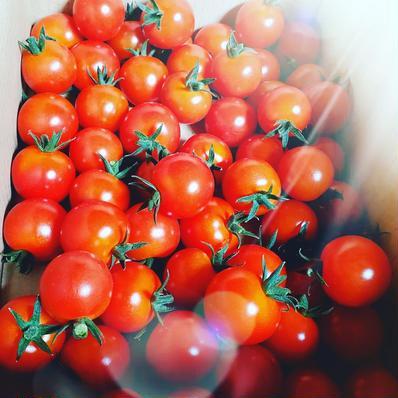 10/8受付終了【4kg】太陽のミニトマト 4kg 果物や野菜などの宅配食材通販産地直送アウル