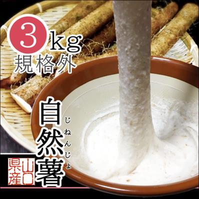 山口県岩国市産 自然薯 規格外品3kg 3kg キーワード: 数量限定 通販