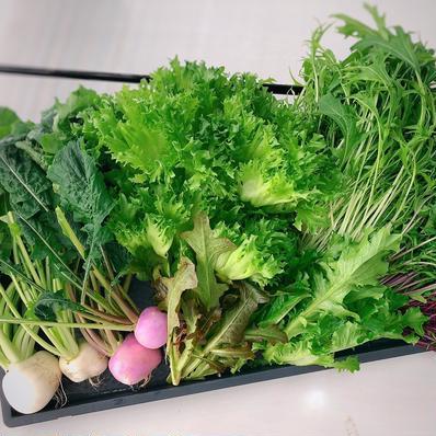 【数量限定】新鮮採れたて!京都伏見産ワクワク水耕野菜セット 12〜13袋 キーワード: 数量限定 通販