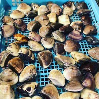 九十九里地はまぐり 1キロ 千葉県ブランド水産物認定品 1キロ入 果物や野菜などの宅配食材通販産地直送アウル