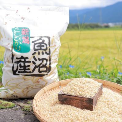 うちやま農園のお米 2㎏(玄米) 2㎏ キーワード: 米 通販