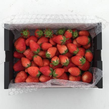 食べ納めだ!【訳あり900g×2】群馬県産やよいひめ 1.8kg 果物や野菜などのお取り寄せ宅配食材通販産地直送アウル