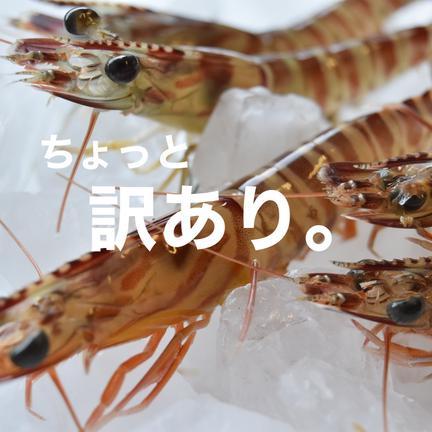 西岡水産 熊本・天草の車海老(冷凍・訳あり) 1パック13〜14尾×2パック(約700g)
