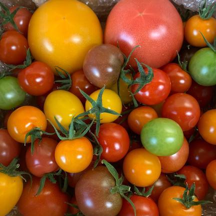 《12品種》SunSunトマトの宝石箱 1kg 果物や野菜などのお取り寄せ宅配食材通販産地直送アウル