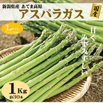 朝採りアスパラガス Lサイズ 1kg(約30本) 新潟県産  果物や野菜などのお取り寄せ宅配食材通販産地直送アウル