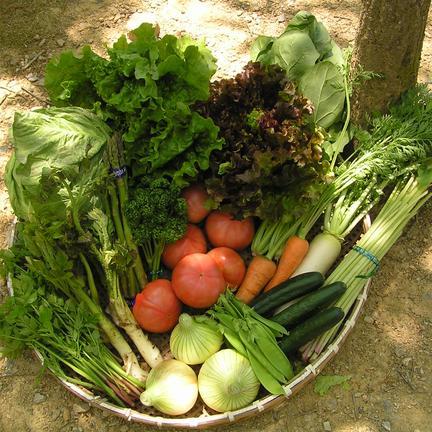 おまかせ 内子産旬の野菜セット(クール便) 果物や野菜などのお取り寄せ宅配食材通販産地直送アウル