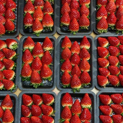 いちごさん平詰め4パック 270g×4パック 果物や野菜などのお取り寄せ宅配食材通販産地直送アウル
