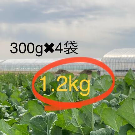 はちしろ農園 春野菜!五月菜(^^)作り手が食べたくて育てたとう菜☆この美味さを味わって! 1.2キログラム