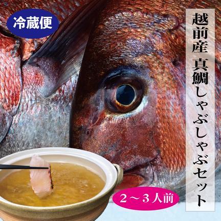 魚屋の喰い処まつ田 【冷蔵】越前産真鯛のしゃぶしゃぶセット2〜3人前 約3キロの真鯛の半身分