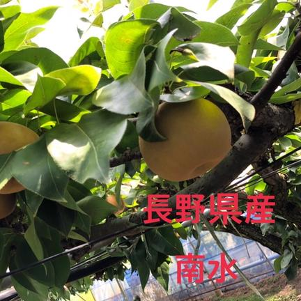 長野生まれの梨 南水! 5kg 果物や野菜などのお取り寄せ宅配食材通販産地直送アウル