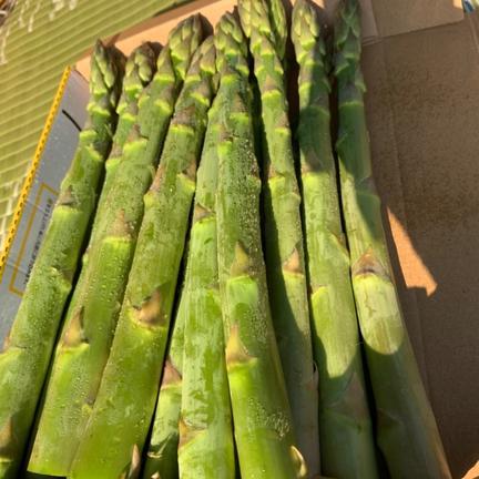 安達農園 感動のアスパラ!自然の甘さを体感してください! 食べ頃サイズM〜L 2kg 2kg