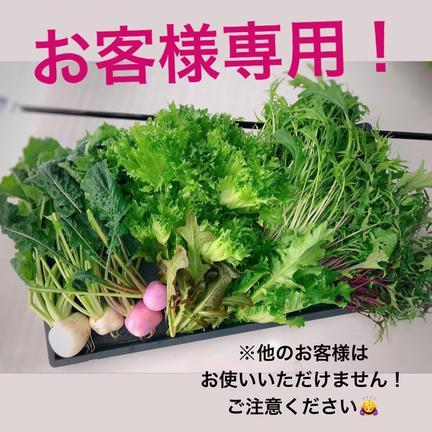 株式会社 大剛 伏見工場 野菜プラント 【お客様専用①】水耕野菜セット