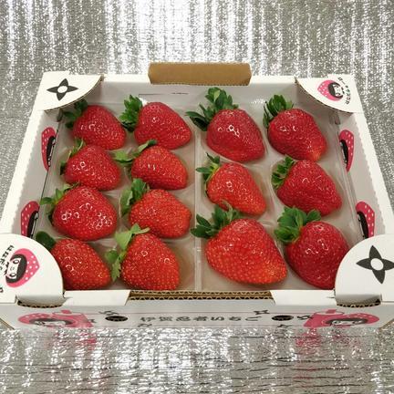 『プレミアムモカベリー 』 苺 イチゴ ※時間指定は可能です。 一箱 苺のみ約540g【約270g×2パック】 果物や野菜などのお取り寄せ宅配食材通販産地直送アウル