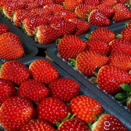 いちごさん、さがほのか食べ比べパック 270g×4パック 果物や野菜などのお取り寄せ宅配食材通販産地直送アウル