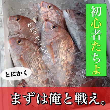 EBISU☆FISHERY 【初心者セット】瀬戸内鮮魚 詰め合わせ お試し  今治 愛媛 入るだけ