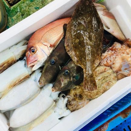 EBISU☆FISHERY ✨お試しサイズ  瀬戸内鮮魚   詰め合わせ  お歳暮  初めての方限定 冬から春のお魚  母の日  父の日✨ 1.5キロ〜