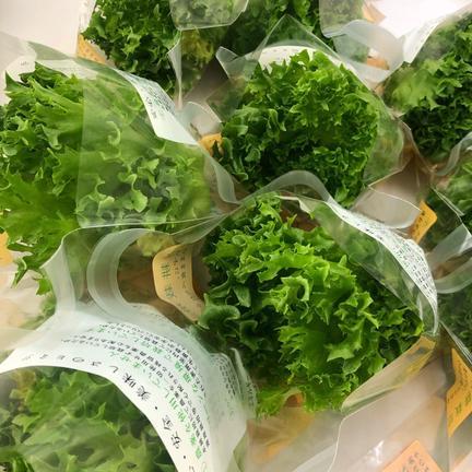 株式会社 大剛 伏見工場 野菜プラント 【待望のセット!】リサちゃんのフリルレタスとホワイトセロリのサラダセット 5袋×約100g