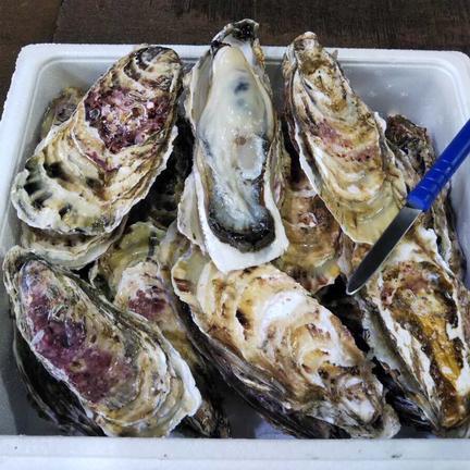 株式会社イワムラ水産 北海道噴火湾産 大粒牡蠣 生食用 18個