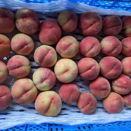 小山果樹園 品種指定「ゆうぞら 」桃3kg【数量限定】朝どり直送便 約3kg(10〜13玉入り)