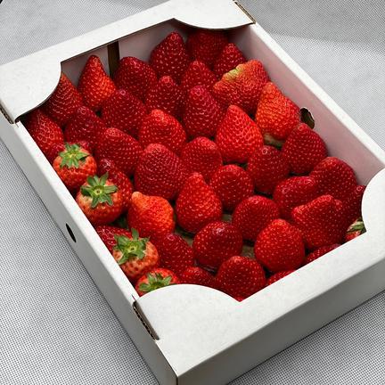 規格外いちごさん(潰れが気にならない方限定) 1kg(箱梱包重さ込み) 果物や野菜などのお取り寄せ宅配食材通販産地直送アウル
