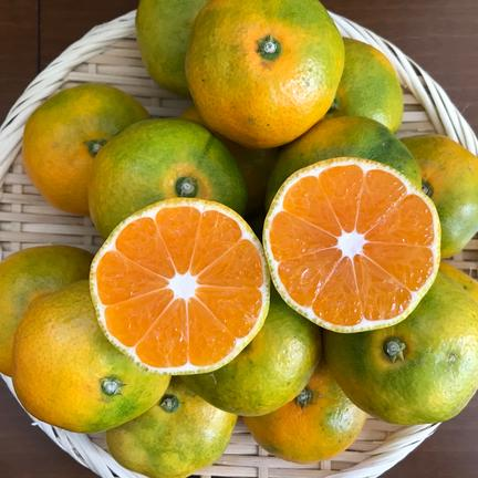 柑橘シーズン到来!『極早生みかん』3㌔ 3㌔ 果物や野菜などのお取り寄せ宅配食材通販産地直送アウル