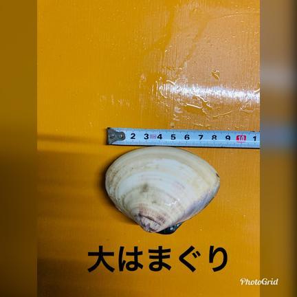 治吉水産 大はまぐり 7キロ 7キロ