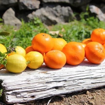 主井農園 主井農園 季節のこだわりみのりセット5kg 5kg