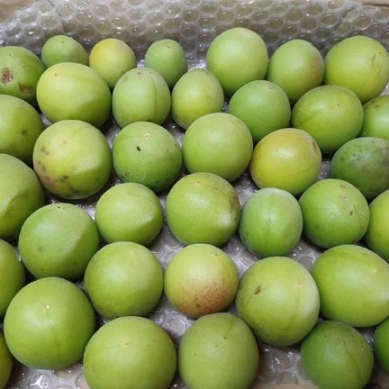 Pachamama 無農薬で育てた梅1kg★パチャママ農園 1kg