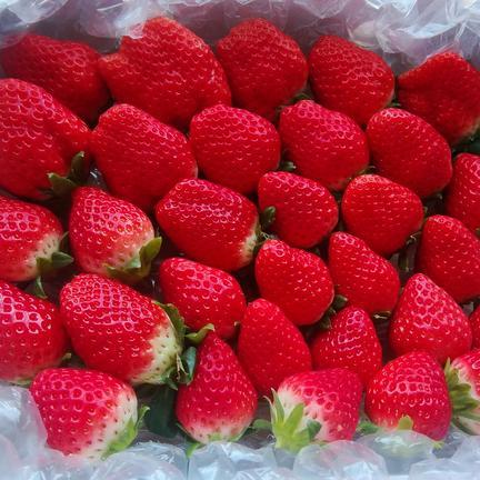 【加工用にも😆】サイゴノ...💝きらきら🍓ほのかちゃん 1箱700グラム以上入り 果物や野菜などのお取り寄せ宅配食材通販産地直送アウル