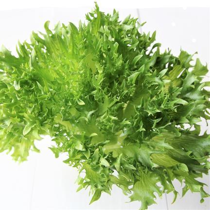 株式会社ココワーク 新鮮!ココワーク自慢の葉物野菜3種セット 約2kg