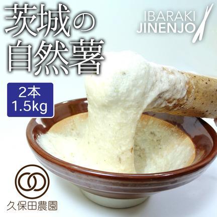 久保田農園 茨城の自然薯 2本(約1.5kg/85cm)短箱 約1.5kg