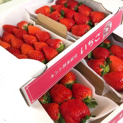 Nakayama Farm KASAKOYA 【サイズ色々、クール冷蔵便】キンド酵素栽培いちご「さがほのか」 270g×4パック サイズ3L〜Lの混合です。