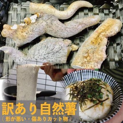 自然薯のくわはら 訳あり自然薯たっぷり2kg(豪雨災害と台風で被害) 2kg