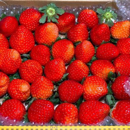 規格外さがほのか2箱(潰れが気にならない方限定) 約1.7kg 果物や野菜などの宅配食材通販産地直送アウル