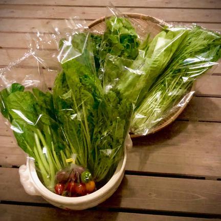 農業生産法人ビッグヤード株式会社 野菜ソムリエ推奨!鍋におすすめの野菜詰め合わせセット【鮮度抜群!香りと食味を楽しむ8品目】