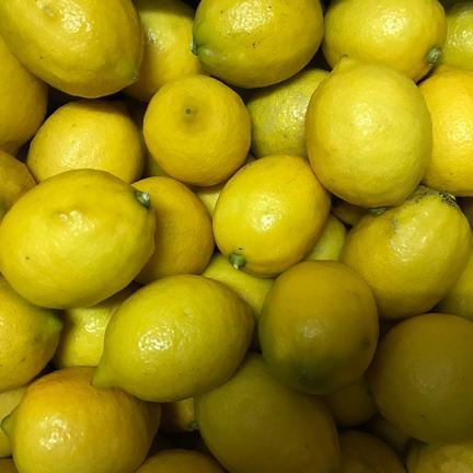 瀬戸内ABFARM お試し!果汁たっぷり『完熟レモン』1㌔ 1.5㌔