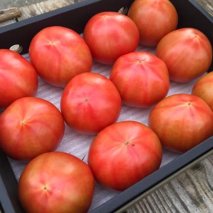 くるるんトマトファーム龍農園 期間限定!!初出品お試し特価【特選】赤採りトマト約1.2kg 1.2kg