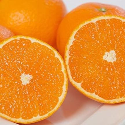 瀬戸内ABFARM お試し!味も香りも抜群の大人気品種『清見タンゴール』(ご家庭用) 1.5㌔
