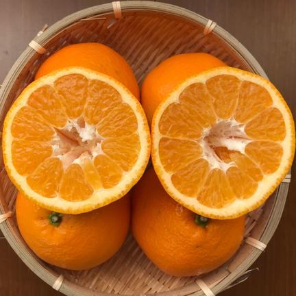 クセになる程よい酸味『いよかん』3㌔ 3㌔ 果物や野菜などの宅配食材通販産地直送アウル