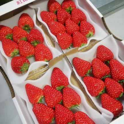 紅ほっぺ 完熟大粒イチゴ 290グラム×4パック 果物や野菜などの宅配食材通販産地直送アウル