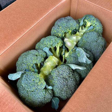ふじもとファーム <販売終了次回11月より>  瀬戸内讃岐・香川県産ブロッコリー 2〜3kg 朝採れブロッコリー8個程度✳️大きさが違うものが同梱される場合があるので個数の指定は不可