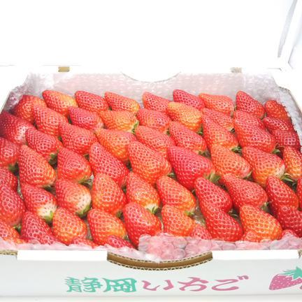笹原果実 【4月中下旬までの期間限定販売】イチゴでお腹いっぱいの幸せ! 1800g(箱や蓋、緩衝材等の重量込)