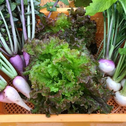 大樹地農園 5品種の野菜を使ったサラダセット🥗 1.7kg