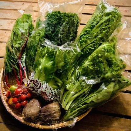 農業生産法人ビッグヤード株式会社 野菜ソムリエ推奨!ご夫婦二人で食べきり量のサラダボウルが作れる詰め合わせセット【鮮度抜群!サラダ野菜少量パック8品目】