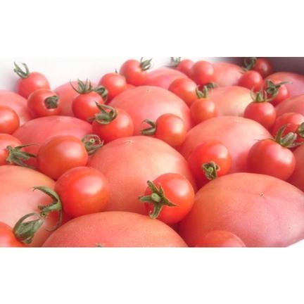 畑の宝石 受賞歴3回‼️ ③訳ありソムリエトマト5kg(18玉~36玉) 酸味が少ないフルーツトマト 5kg以上