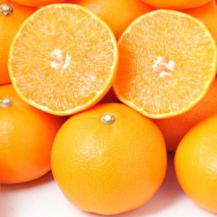 瀬戸内ABFARM お試し!春の柑橘食べ比べセット(ご家庭用) 1.5㌔