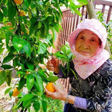 【S~M1kg】94歳とみ子ばぁばの清美(きよみ)オレンジ S~M 1kg 6個~8個 果物や野菜などの宅配食材通販産地直送アウル